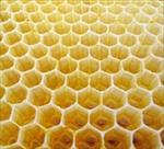 طرح-توجیهی-تولید-کندوی-عسل-صندوق-میوه-سنتی-چهارچوب-در-و-پنجره