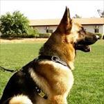 رفلاکس-ادراری-و-درمان-آندوسکوپیک-آن-با-ماده-جدید-زیست-محیط-سازگار-در-سگ