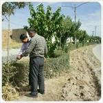 پاورپوینت-چند-بیماری-گیاهان-و-درختان