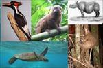 پاورپوینت-کدهای-اختصاصی-پژوهش-بر-روی-حیوانات
