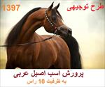 طرح-توجیهی-پرورش-اسب-عربی-1397