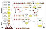 غربالگری-نوزادان-برای-بیماری-های-نقص-ایمنی-مرکب-شدید-(scid)-با-استفاده-ازسنجش-trec-و-krec-(neonata
