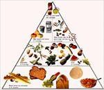 چه-غذایی-بخوریم-تا-سالم-زندگی-کنیم؟