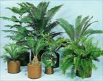 پاورپوینت-(اسلاید)-گیاهان-آپارتمانی