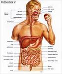 پاورپوینت-(اسلاید)-آناتومی-و-فیزیولوژی-دستگاه-گوارش