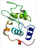 تحقیق-پروتئین-و-انواع-ساختارهای-آن