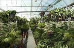 طرح-توجیهی-پرورش-گل-و-گياه-در-گلخانه