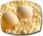 طرح-توجیهی-پودر-تخم-مرغ