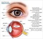ساختار-چشم-و-بیماری-کاتاراکت