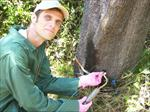 تحقیق-تزریق-مواد-شیمیایی-در-تنه-درختان
