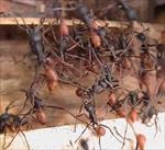 پاورپوینت-استفاده-ازالگوريتمهای-الهام-گرفته-از-کلونی-مورچه-ها-در-مسيريابی-شبکه-های-کامپيوتری