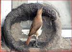 پاورپوینت-تحلیل-عوامل-موثر-بر-ساخت-لانه-در-حیوانات