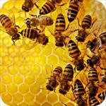 طرح-توجیهی-کارگاه-بسته-بندی-عسل