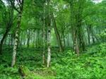 پاورپوینت-اهمیت-و-نقش-جنگل-ها