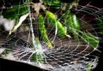 پاورپوینت-معماری-و-لانه-گزینی-عنکبوت