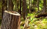 پاورپوینت-جنگل-زدايي-مرگ-سبز