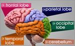 پاورپوینت-سیستم-عصبی