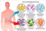 immunomodulatory-functions-of-probiotics