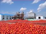 پاورپوینت-رب-گوجه-فرنگی؛-تکنولوژی-و-فراوری-آن